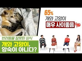 개와 고양이, 앙숙 아닌 단짝도 가능하다? [펫과사전] 11회