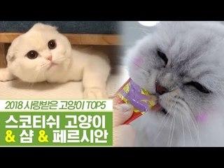 2018년 사람들에게 사랑받은 고양이 [펫과사전] 11회