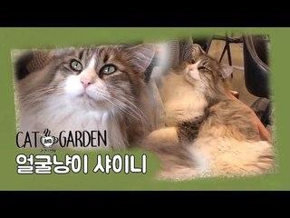거부할 수 없는 '샤이니' [고양이정원] 5회