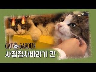 사장바라기 '칸' [고양이정원] 4회
