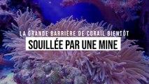 Un désastre validé par l'Australie : la Grande barrière de corail bientôt souillée par une mine
