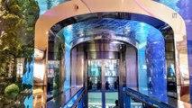 Énorme frayeur dans un centre commercial : Un aquarium géant d'1 million de litres d'eau se fissure et inonde tout