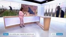 Vignes : une culotte pour mesure la santé du sol