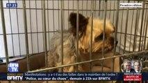 Les défenseurs des animaux réclament des peines plus sévères pour ceux qui les maltraitent