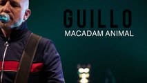 Guillo - Teaser Macadam Animal