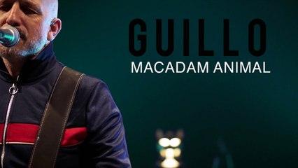 Guillo - Teaser Macadam Animal