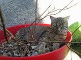 Les Experts Jardin: Les répulsifs naturels contre les chats