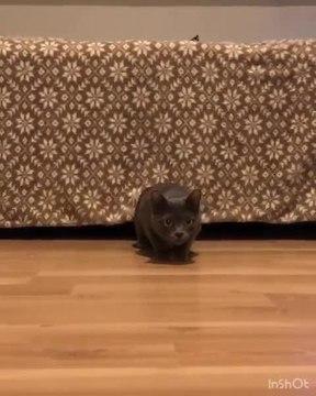 Cat Walks Sneakily in Plain Sight