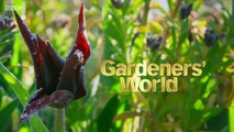 Gardeners World episode 6 2019