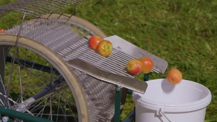 This Fruit Collector Is Essential For Harvesting  Season