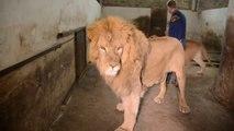 Les russes n'ont pas peur des lions... La preuve avec ce dresseur