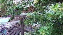Cão farejador em apreensão de drogas na Serra