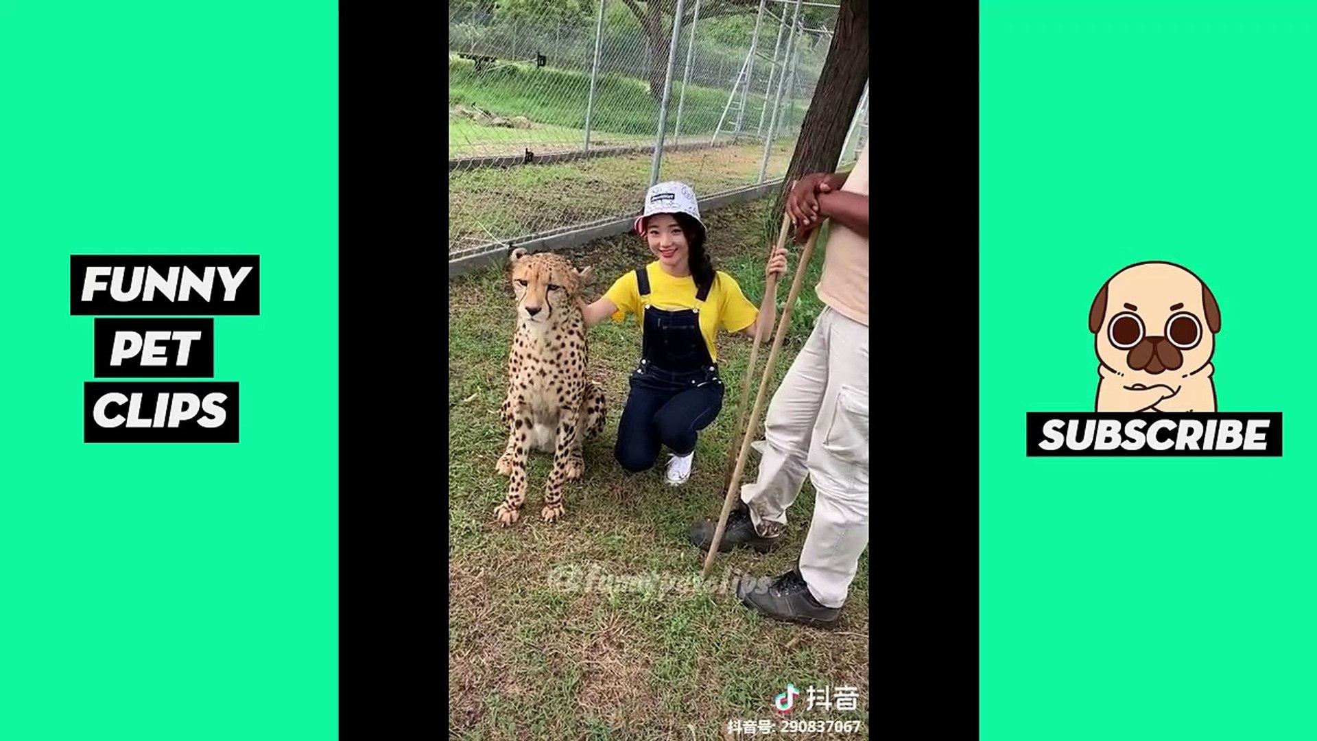 Funny Cute Animals: Tik Tok Pets #62