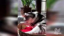 Chat Mignon ✪ Chat Drôle ✪ Vidéo De Chat À Mourir De Rire #13 - YouTube