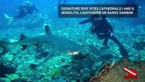 Readers Choice 2019: Dive Maui / Hawaiian Rafting Adventures