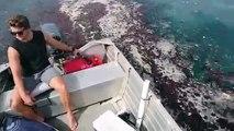 Quand des milliers de méduses recouvrent la surface de la mer