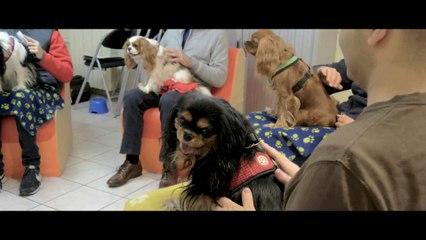 """La médiation animale - hôpital de jour adultes de Sartrouville - CH Théophile Roussel - par l'association """"Une Patte - Un Regard"""""""