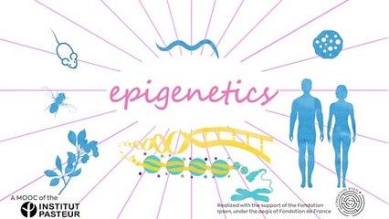 FUN MOOC : Epigenetics