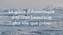 La glace d'Antarctique disparait beaucoup plus vite que prévu