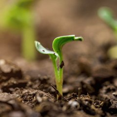 Ex-Seed All Your Replanting Dreams with These 11 Clever Hacks