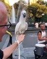 Il a le rythme dans la peau ce perroquet qui danse à côté d'un batteur dans la rue