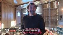 Limousin : un élevage de poules à la retraite