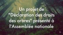 Et si les arbres étaient considérés comme des êtres vivants dans le code civil français ?