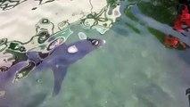 Marseille : un requin de 3m coincé dans le port de l'Estaque