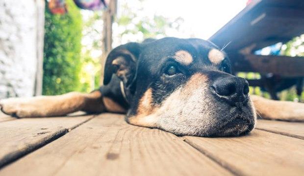 Wie berechnet man das Alter seiner Hundes?
