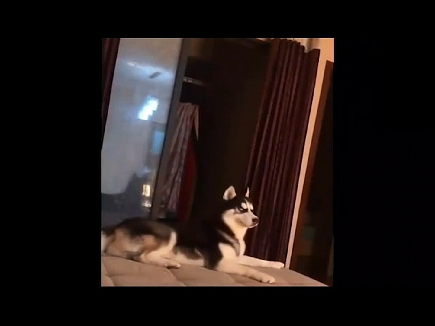 Cute animals Videos Compilation cute moment#2
