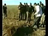Cattle mutilation-mutilation de betail-argentina 2002