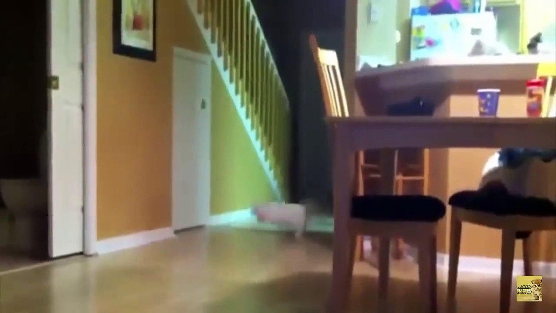 Videos Graciosos 2018 - Videos de Risa de Gatos Chistosos