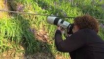 Un tapis mauve de jacinthes sauvages s'offre en spectacle