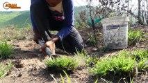 Primitive Technology: Man Make Build Deep Hole Underground Python Trap Using Hole Bucket & Chicken