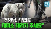 """[엠빅뉴스] """"우리도 챙겨주세요"""" 갈 곳 잃은 산불피해 반려동물들"""