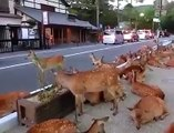 Lovely Deers - Exceptionally beautiful are these Deers