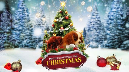 Christmas Puppies.Project Puppies For Christmas Trailer 1 2019 John