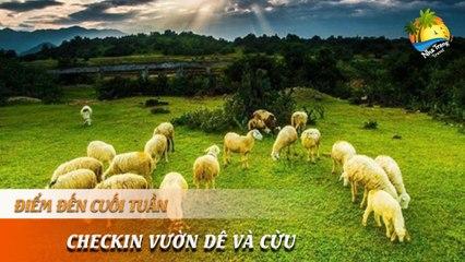 [ĐIỂM ĐẾN CUỐI TUẦN] - Mãn nhãn vườn cừu trắng , dê núi trên Đảo Khỉ | NHA TRANG TRAVEL