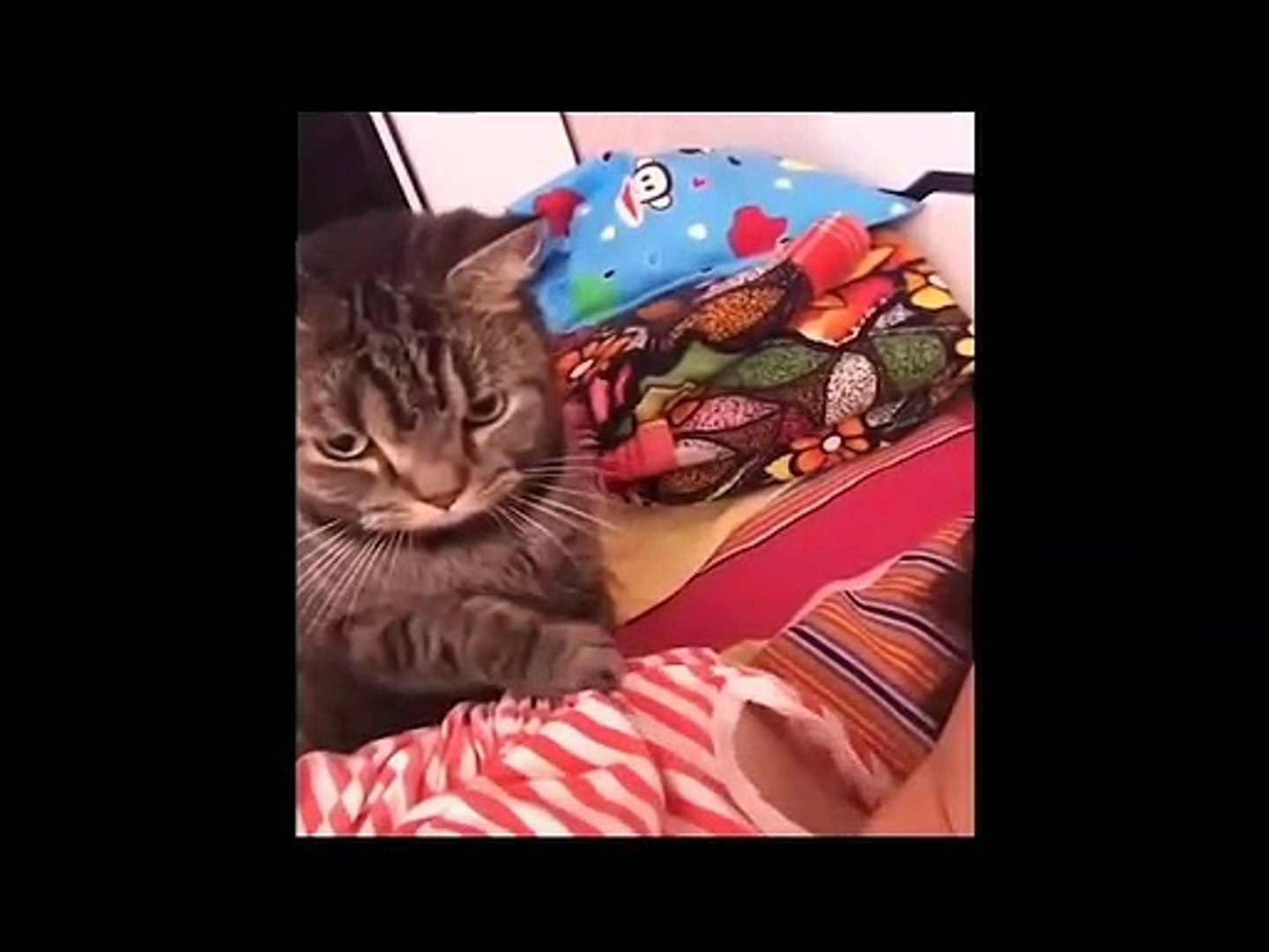 Cute animals Videos Compilation cute moment#4