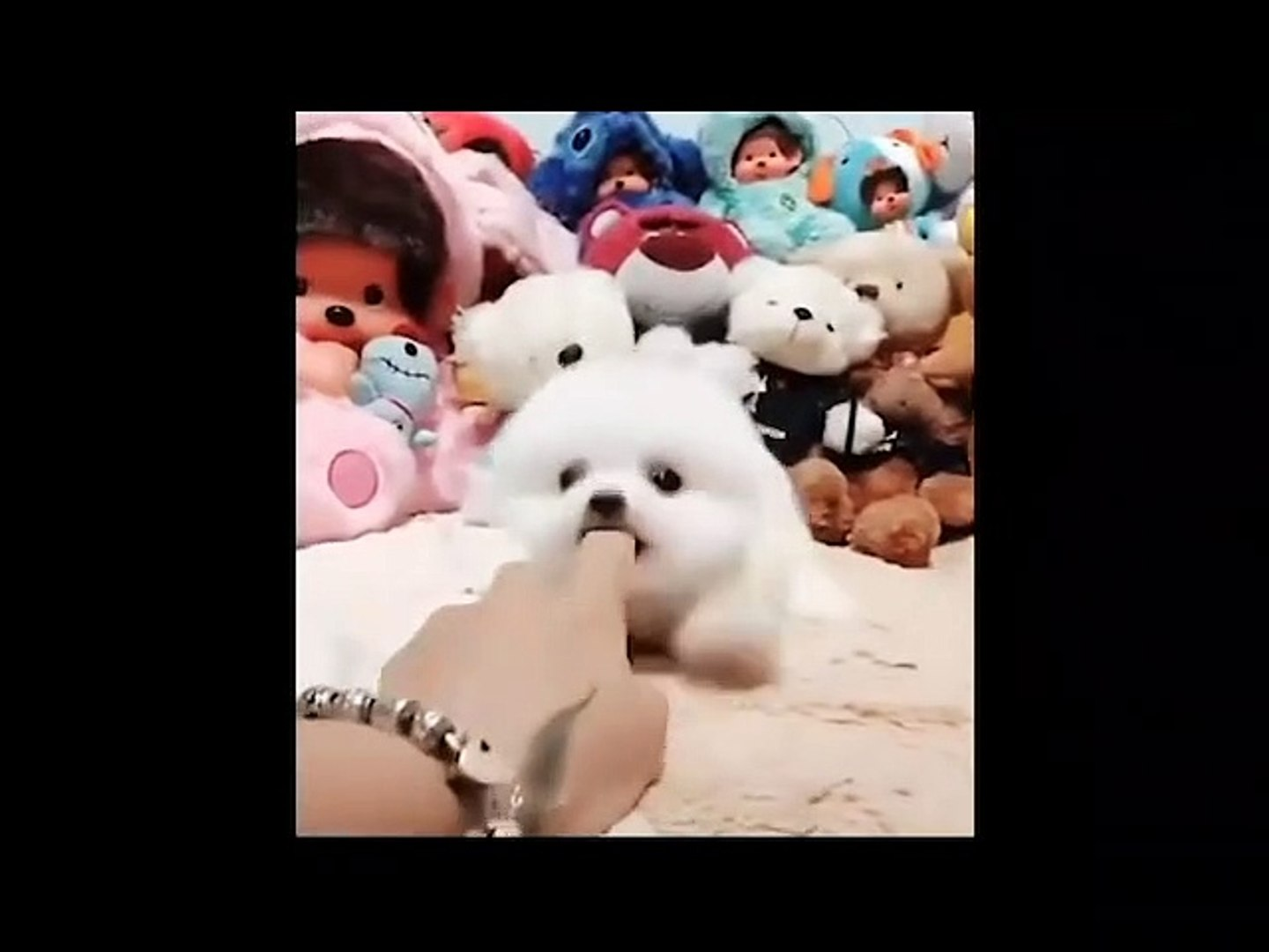 Cute animals Videos Compilation cute moment#6