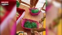 Franck Ribéry se déguise pour fêter Pâques en famille (vidéo)