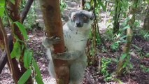 Video: Poaching, deforestation wiping out Madagascar's forests