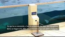 """""""Les dauphins ne peuvent même pas plonger"""" : une association porte plainte contre le parc Marineland"""