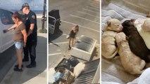 Une femme arrêtée pour avoir jeté 7 chiots dans une benne à ordures