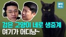 [엠빅뉴스] 검은 고양이 네로, 잠실 야구장 난입사건