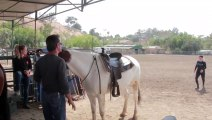 Ce cheval donne un petit coup de pouce pour une femme qui tente de monter sur lui