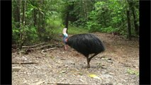 Giant Flightless Bird That Killed Owner Up For Sale
