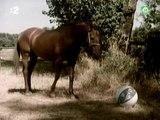 Príbehy koníka Mateja (1977)