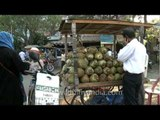 Coconut water to drink, in Pune