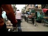 Cycle rickshaw ride through Chandni Chowk, Delhi